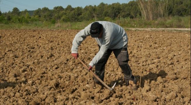 farmer tilling soil