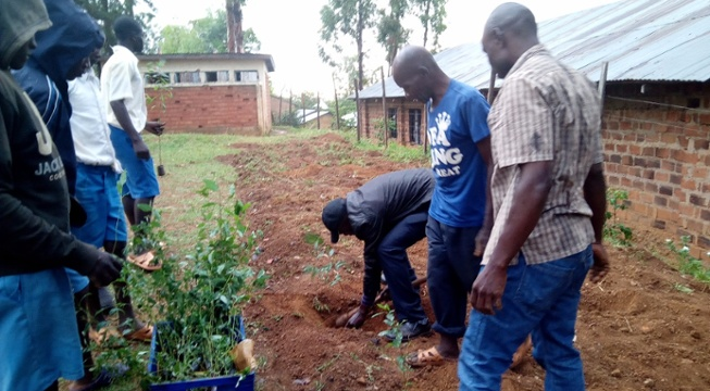 Pachamama Alliance Kenya Plants 1500 Trees with Local Schools